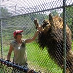 Boomer the lion gets a snack