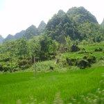 Cau Bang paddy fields and cone shape mountain