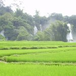 Broght green paddy field in front of the waterfall
