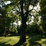 Villa Rothschild - le jardin