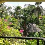 Palmengarten von der Rezeption aus gesehen