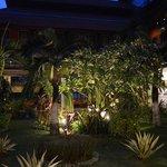 garden near Lobby at night
