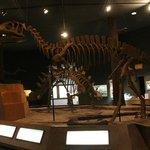 dinsosaurs