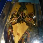 Largest Lobster caught