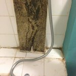 Mould in the bathroom