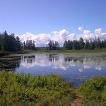 On one of the hiking trails is Goose Pond