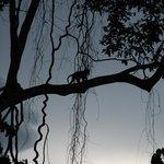 monkeys always arround