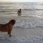 our delicate doggies at the beach enjoying the sea!