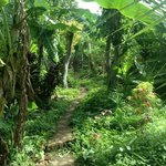 Beautiful jungle-like paths!