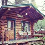 Burl Cabin