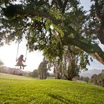 Historic, centuries-old Oak trees dot the property surrounding the Inn
