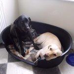 Ella and Dora enjoying the comfortable bed