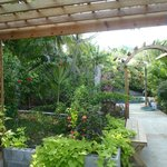 """the lovely garden outside of our """"cando"""""""
