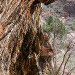 Weeping Rock & Hanging Garden