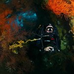 Diving the liberty wreck on rebreathers