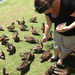 Feeding the ducks, turtles and fish!