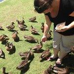 Feeding the ducks, turtles and fish!