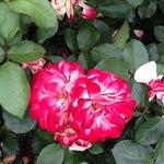 another stunning flower