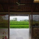 View of rice fields from massage area