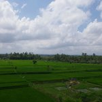 Rice fields - view from room (4th floor balcony)