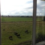 Sheep from bedroom window
