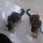 små söta katter som vi gav mat