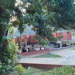 A leafy angle of Biryani House