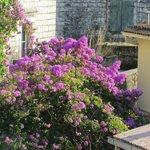Nice gardens