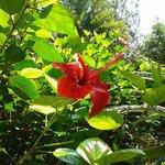 Dettaglio del giardino tropicale dell'hotel