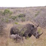 Jabulani, the father of the baby Legacy, was sadly killed in April by poachers