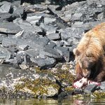 Bear seen from lodge's fishing boat
