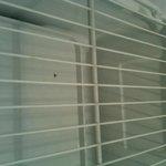 Dead bug in fridge