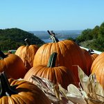 A picture from October '12. Pumpkins and Fall colors add to the experience.