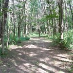 Trail behind motel