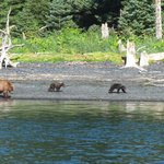 Bears from the fishing boat