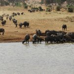 A crowded water hole at the lodge!!!