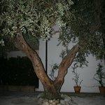 Träden har nattbelysning