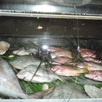 Fresh Fish in the Case