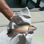 One of the many fish that we caught