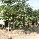 Photo of Villas y Bungalows Tlaquepaque