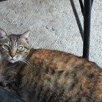Siesta's resident cat