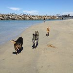 Leash Free Dog Beach