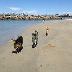 Leash Free Dog Beach