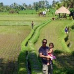 rice paddy fields and view from pool and restaurant