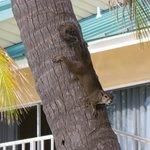 A cute visitor!