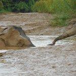 "Elephants ""trunking"""