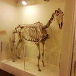 Horse skeleton just one of hundreds of skeletons