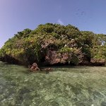 Bird Island sanctuary - birds and coral snakes
