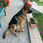 Charly patrols the agriturismo all the time!