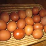 Our clever chickens lay your breakfast eggs